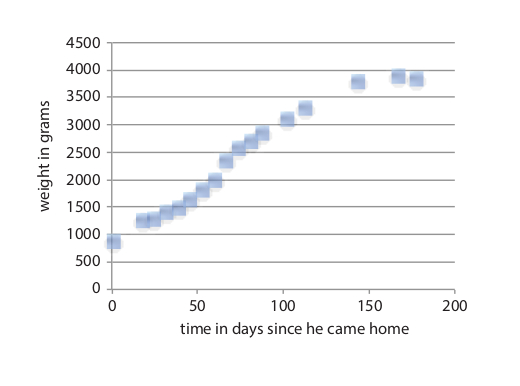 Mr. Leo's weight graph