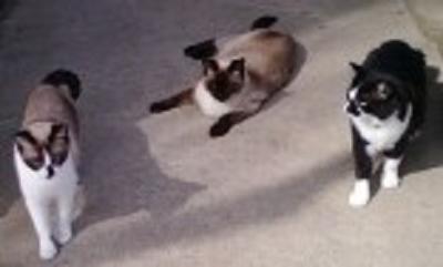 Hootie, Ausie & Dizzy
