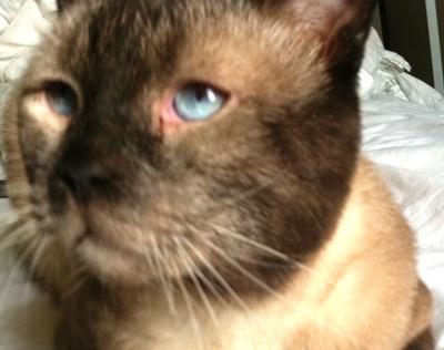 Eye Boogers In Cats Cat eye problems - and what