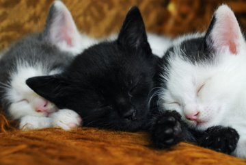 Three kittens dreaming?