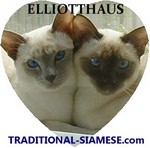 Siamese cats from Elliotthaus Siamese