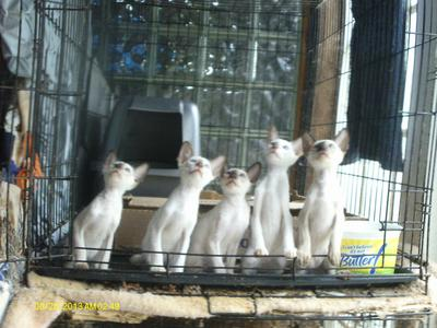 One of our litters