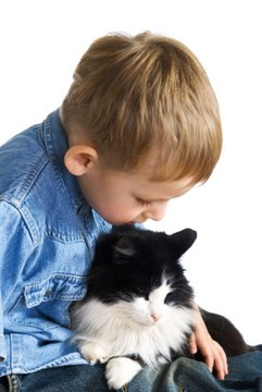 Child exploring how cats purr