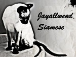 Siamese cat logo from Jayallwend Siamese