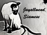 Siamese cat logo from Jayallwend Siamese
