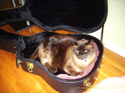 Jinx and the guitar case - an unusual bed!