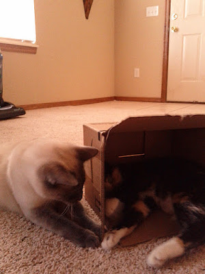 Elwood and Peaches playing in the Amazon box!