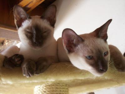 Lucy & Sammy
