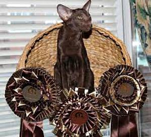 Cat Show winner