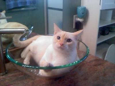 Cat in the sink!