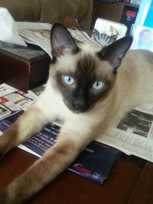 My Whisky Blue-Eyes