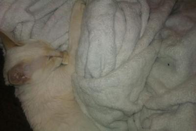 Curled up in his blanket sucking his thumb!