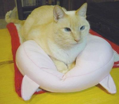 Rascalbear, sitting pretty on his pink kitty pillow