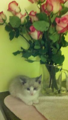 The very first night I got her - with roses!
