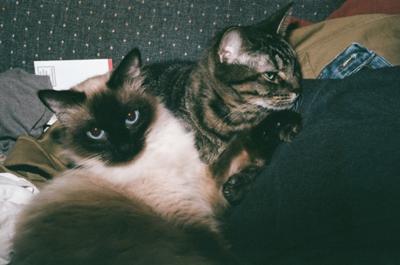 Shaggy and Hidey