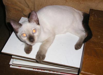 Mongkut aged six months