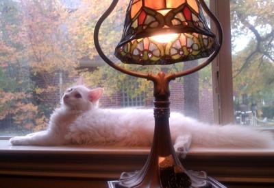 Leo relaxing in the window