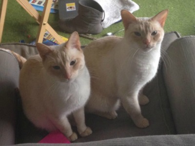 Tybalt and Mercutio, as they are today