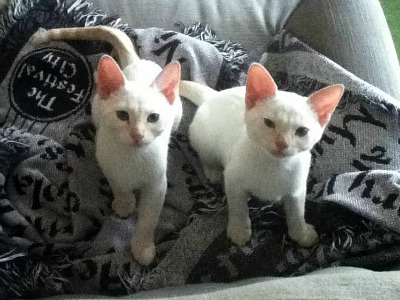 Tybalt and Mercutio, not long after we got them