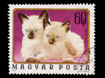 Stamp featuring Siamese kittens