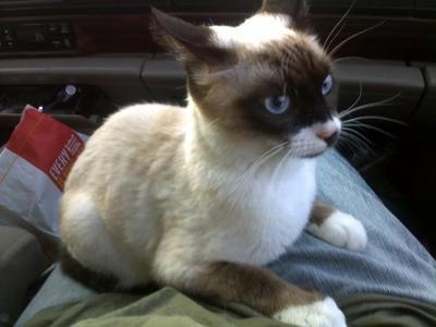 cat 3176 specs