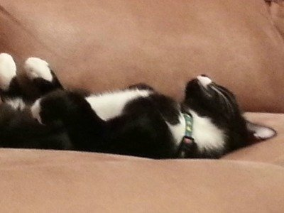 Black and white cat, Blighty