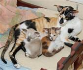 Rags with her kittens