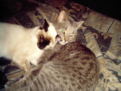 Yoshi Princess and Remmy