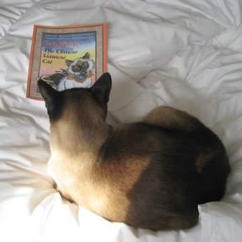 Siamese cat reading 'Sagwa, The Chinese Siamese Cat'
