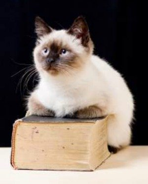 Siamese cat sitting on a dictionary - so many names to choose from!