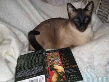 Siamese cat reading 'The Cat Who' series